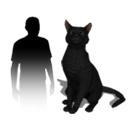 Animal Avatars - Cat - Black